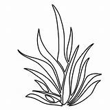 Plants Coloring Pages Plant Drawing Seaweed Sea Grass Underwater Ocean Clipart Aquatic Shrubs Colouring Pencil Draw Outlines Aquarium Seagrass Printable sketch template