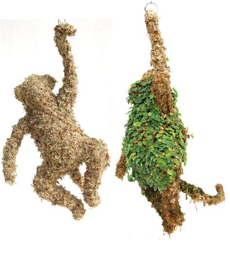 Topiary Monkey  Medium Filled With Sphagnum Moss 27