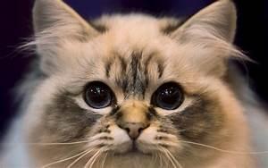 Cute Cats #7 | Cute Cats  Cute