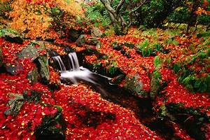 Red Leaves Beautiful Fall Landscapes HD Wallpapers HQ ...