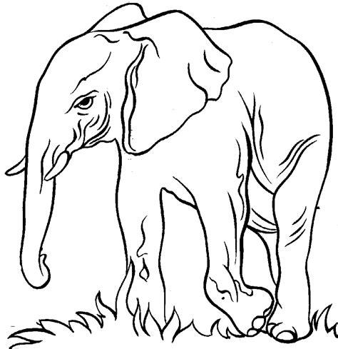 images elephant   clip art  clip