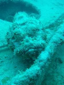 Scuba Diving Ship Wrecks in Key Largo, Florida | vertical ...  Wreck