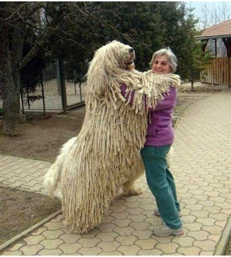 Exotic Rugs For Sale by Huge Dogs