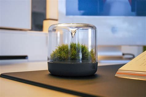Sanctuary: Little Mossarium Brings a Slice of Natural