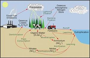 9 S  The Nitrogen Cycle