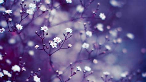 lavender flower wallpapers hd pixelstalknet