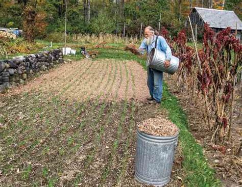 Mulch With Dried Leaves-organic Gardening-mother Earth
