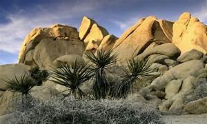 Joshua Tree National Park In California Due Deserti In Un