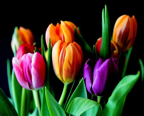 free photo flowers tulips bouquet free image on