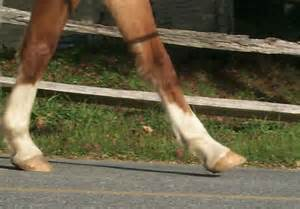 1000  Images About Hoof Structure And Health On Pinterest