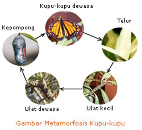 pertumbuhan hewan chezchawans site
