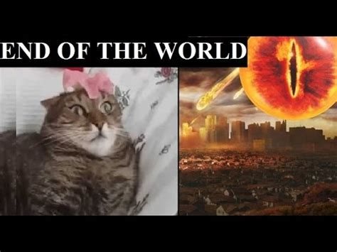 Meme End Of The World - cat sees the end of world youtube