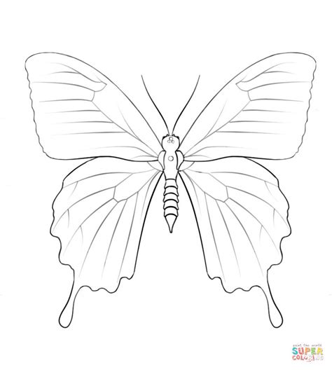 ulysses butterfly coloring page  printable coloring