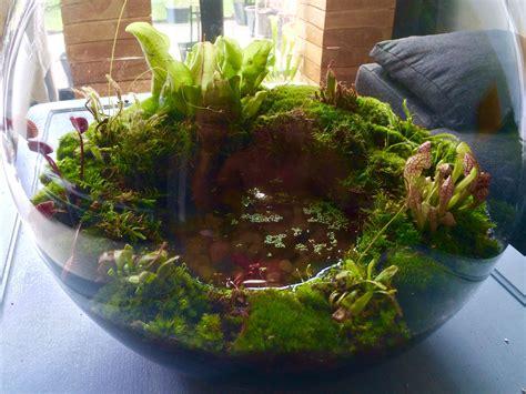 Terrarium Im Glas by Carnivorous Plants Terrarium Terrarium Zimmerpflanzen
