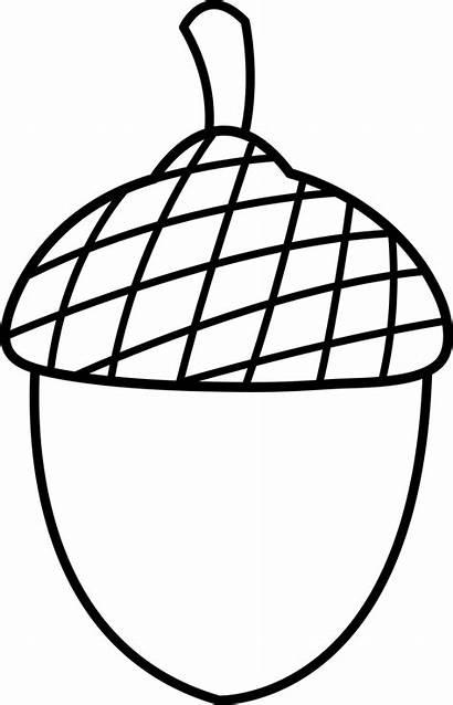 Acorn Clipart Nut Clip Clipartion Button