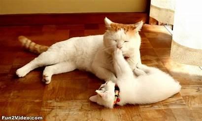 Cat Kittens Animation Tweet