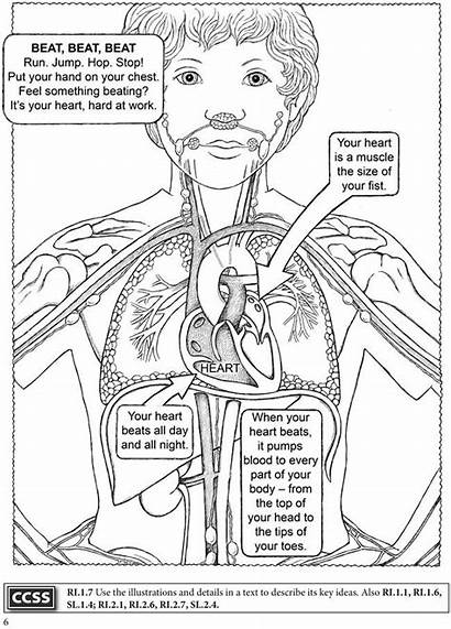Coloring Human Pages Anatomy Science Systems Dover