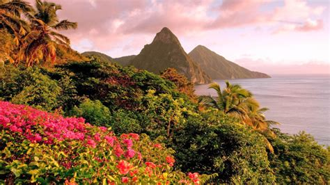 caribbean island  saint lucia tropical flowers piton mountains soufriere bay landscape