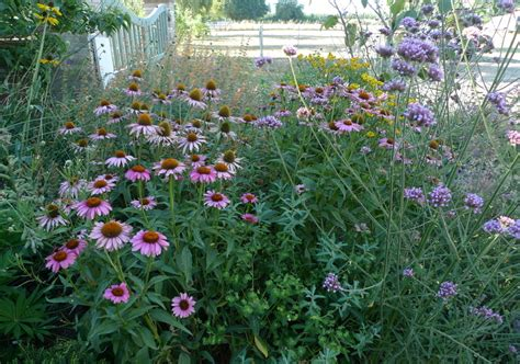 late summer flowers showy late summer blooming perennial flowers portland monthly