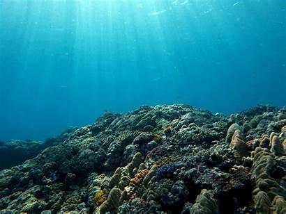Marine Oceans Habitats Oxygen Warmer