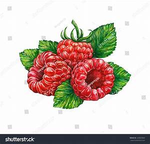 Great Illustration Of Raspberry Isolated On White ...