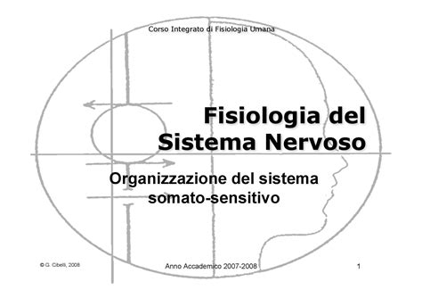 dispense fisiologia fisiologia umana ii sistema somato sensitivo dispense