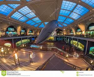 Marine Life Room At The American Museum Of Natural History ...