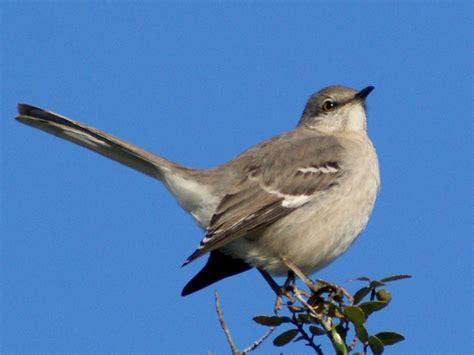 se texas birding wildlife watching let us now praise
