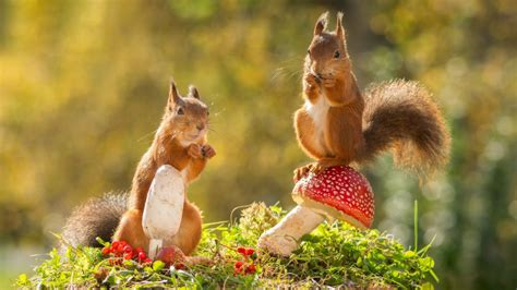 Autumn Animal Wallpaper - these animals are in with autumn and they are just