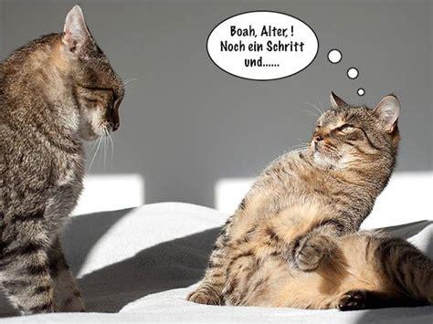 lustige katzenbilder