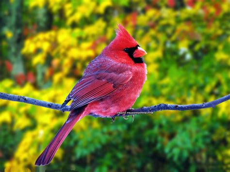 15 Beautiful Birds Latest Hd Wallpapers 2013 Beautiful