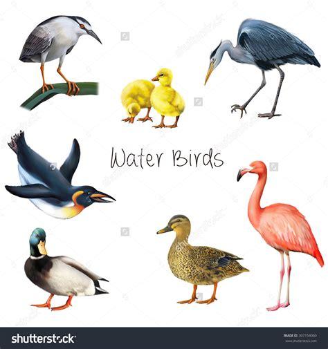 waterbirds clipart clipground