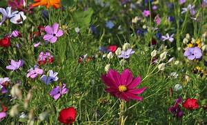 Blumen Erkennen App : pflanzen bestimmen ~ A.2002-acura-tl-radio.info Haus und Dekorationen