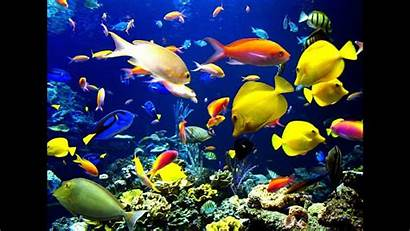 Swimming Fishes Aquarium Fish Pretty Ocean Tropical