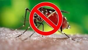 Qu Est Ce Qui Attire Les Moustiques : pourquoi ne pourrait on pas tuer tous les moustiques sur ~ Voncanada.com Idées de Décoration