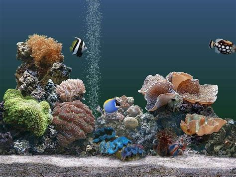 desktop background fond d 233 cran gratuit aquarium qui bouge