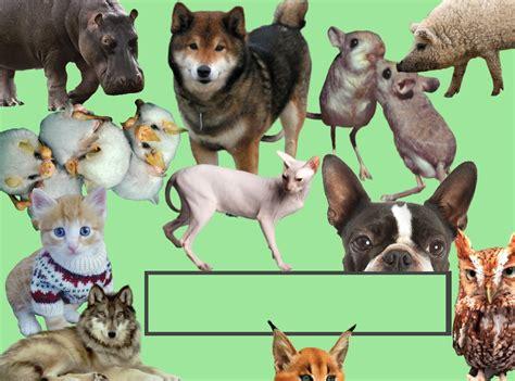 opinion   article ways  promote animal welfare