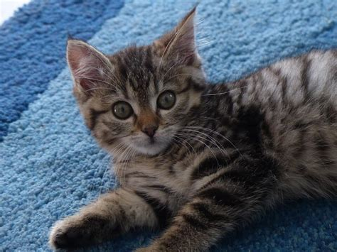 ears cat why sitter cats kitten professional sick hire reasons tweet save