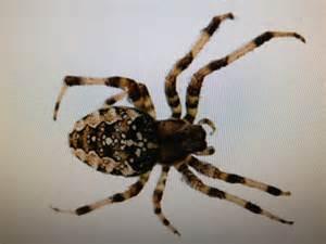 Common Ohio Spiders Poisonous