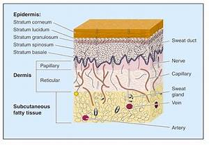 Skin Anatomy 101