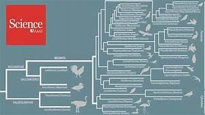 Oviduct Diagram Of Avian Species