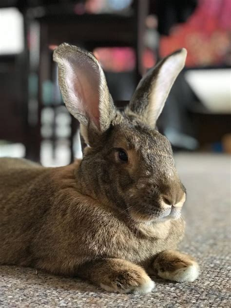 A Friend Of Ours Is Watching Our Bunny While Were On