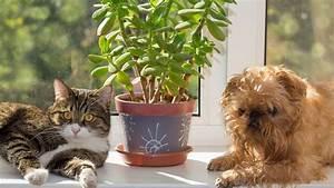 Pflanzen Zu Hause : haustiere giftige pflanzen das sollten sie beachten ~ Markanthonyermac.com Haus und Dekorationen