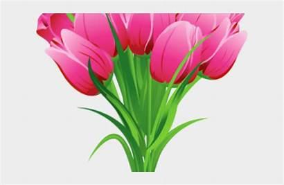 Tulip Clipart Flower Bouquet Bokeh Jing Fm