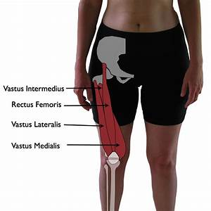 Vastus Lateralis Trigger Points  The Knee Pain Trigger