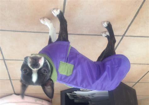 windhunde und mantel dogblog