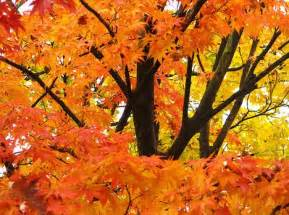 beautiful thanksgiving photos beautiful thanksgiving wallpapers dirty pretty things