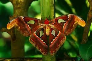 Beautiful Moth Species