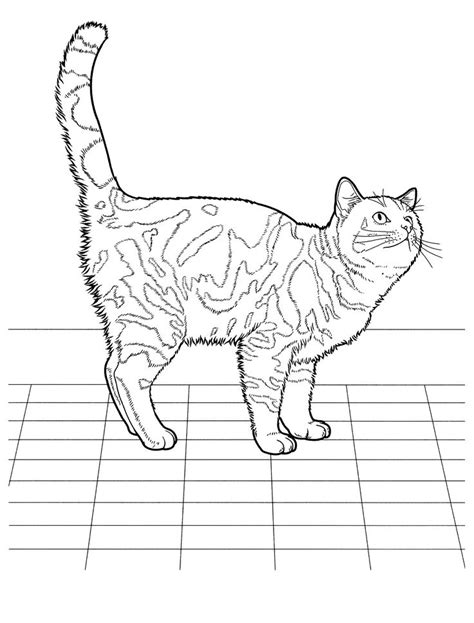 images  favorite cat colouring pages  pinterest