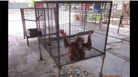 zoo surabaya cruelty conditions animals abuse zoos bad cruel indonesia jooinn